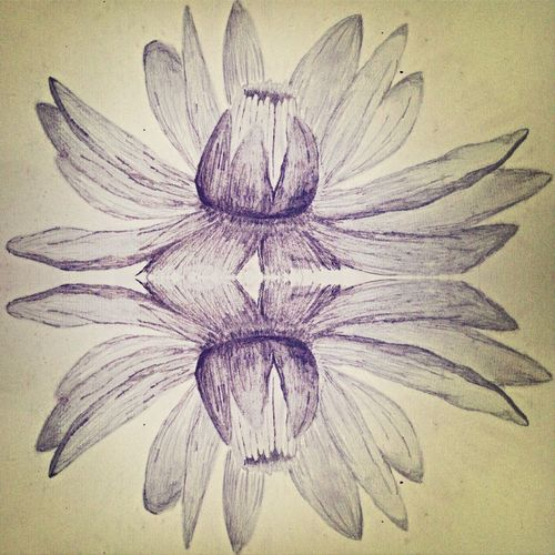 Reflection Drawing Flower