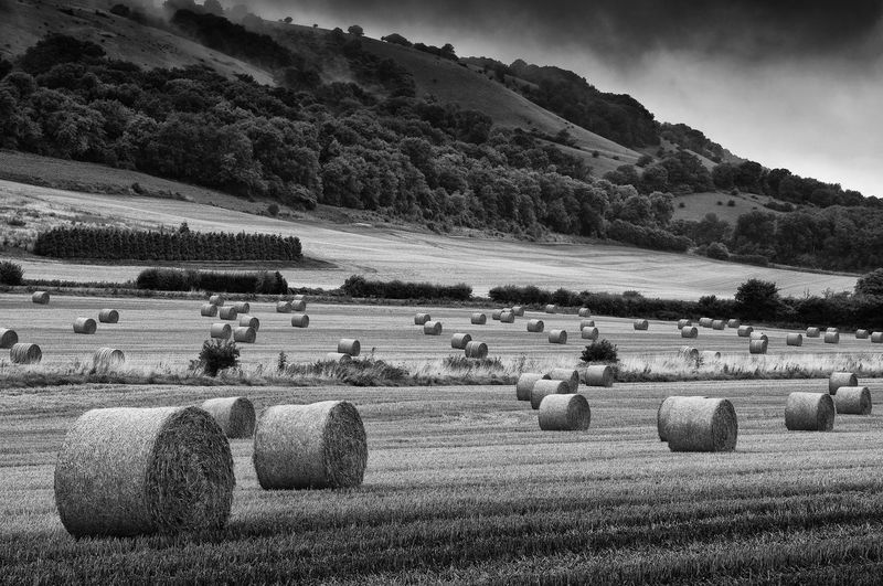 Haybale Agriculture Bale  Beauty In Nature Crop  Day Farm Field Grass Harvesting Hay Hay Bale Landscape Mountain Nature No People Outdoors Rural Scene Scenics Sky Solitude Tranquil Scene Tranquility Wheat