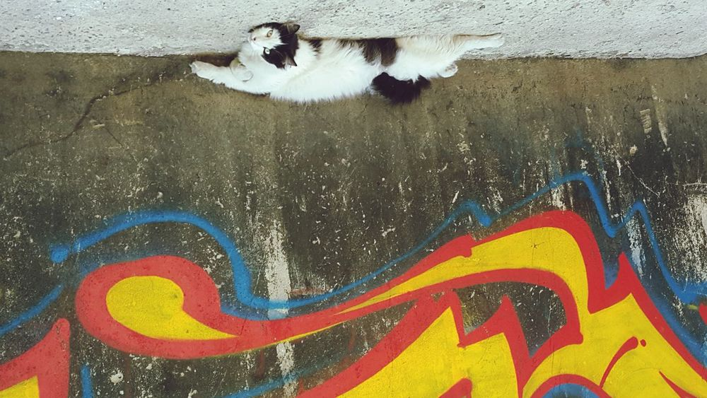 Eyeemcollection Showing ımperfection Urban Urbancat Cat Cat Lovers EyeEm Best Shots Catmodel  Photography Photos Around You Istanbul Turkey Urbanphotography Colors Confused? Me Too. Confusing Upside Down