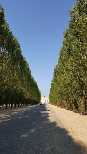 Narrow walkway along trees on sunny day