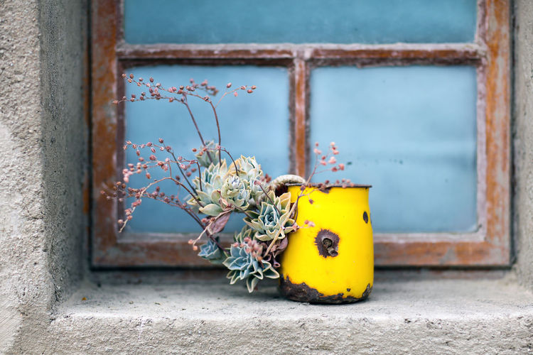 Succulents Blue Growth Neiu Bethesda No People Outdoors Planter South Africa Streetphotography Succulents Vase Window Yellow Yellow Color