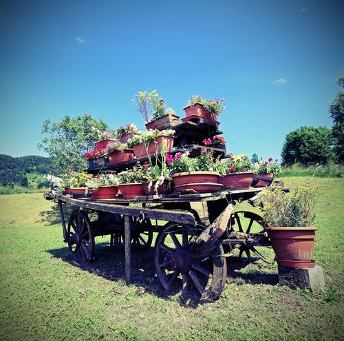 wooden cart festooned with many pots of flowers in the meadow Folgaria Garden Flowers Gardening Horse Cart Lomography Nature Trentino  Trentino Alto Adige Cart Far West Garden Landscape Lomo Old Outdoors Pots Tranport Vases Vintage