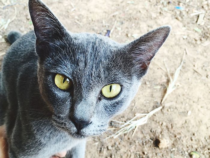 Cat Cat Lovers Cat Eyes Gray Gray Cat See What I See See The World Through My Eyes Pet Cute Cute Cats