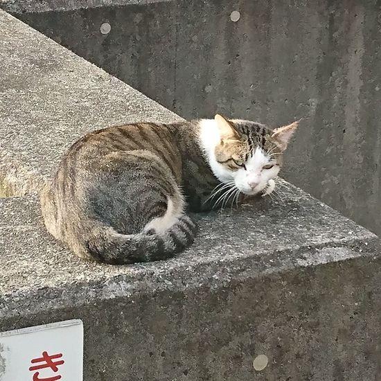 何見てんだよ、という声が聞こえた? Cat 猫