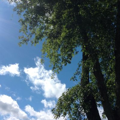 Happy Weekend 💙 Chilly Day Tree Low Angle View Cloud - Sky Beauty In Nature Sunlight Day Green Color Branch Scenics - Nature