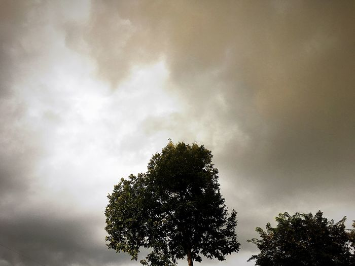 Tree Low Angle View Sky Beauty In Nature Nature Growth Day Outdoors No People Cloud - Sky Branch Scenics