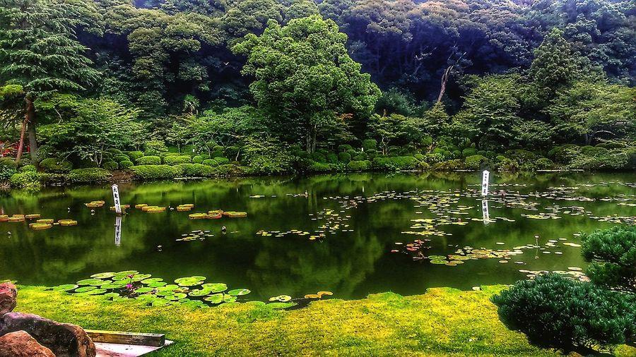 🏞️ Japan Peace