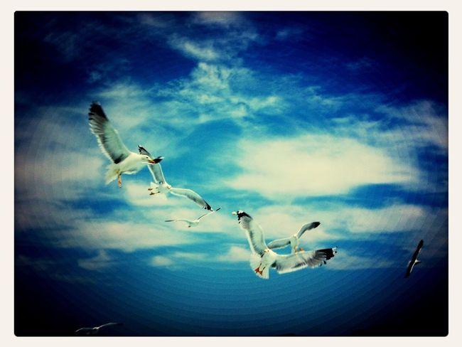 EyeEm Birds Seagulls Show Me Your Compassion.