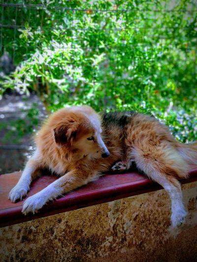 Baby, my dog Dog Domestic Animals Myfamilydog Close-up