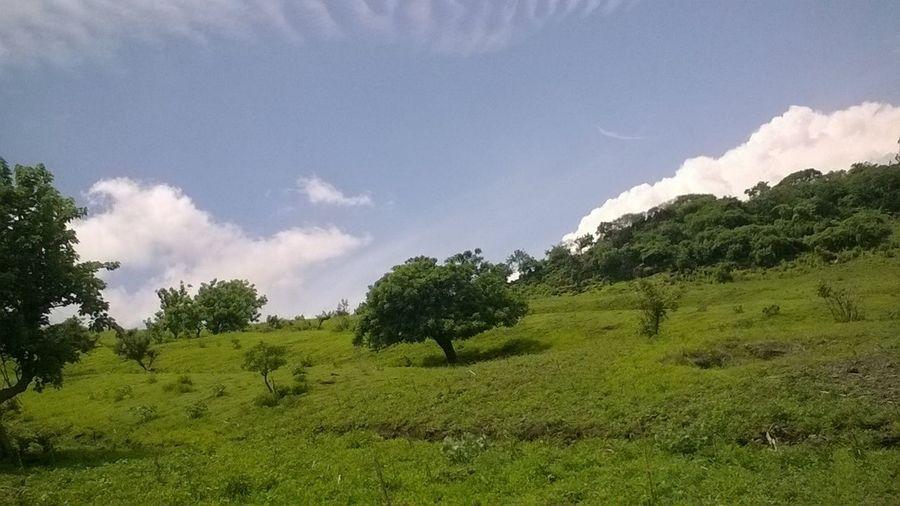 Arbol en la montaña ' Landscape Nature Hill Tranquility Grass