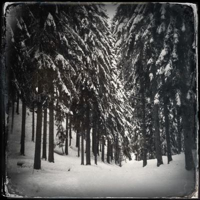 Into the woods Blackandwhite Hipstamatic Trees The_guido