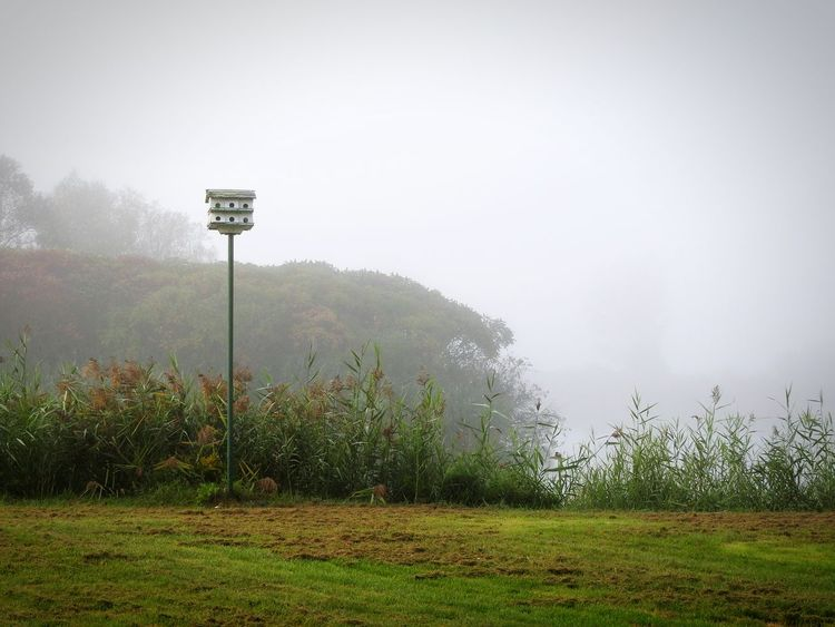 Lofty Lifestyles ~ Fog No People Grass Outdoors Parks And Recreation Peaceful Place Country Walks Nikon Photography The Week On EyeEm Nature On Your Doorstep Beauty In Nature Morning Light Morning Mist Birdhouse Wood Pole Riverbank Reeds, Weeds, Marshland, Marsh, Wet Grass