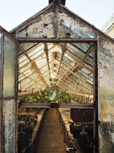 Gardening Agriculture Greenhouse Metal Nature Plant Plant Nursery Rusty