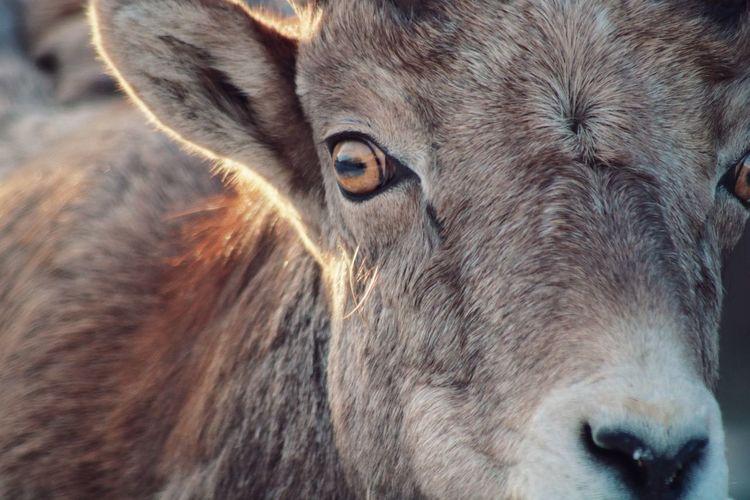 Close-up portrait of a horse
