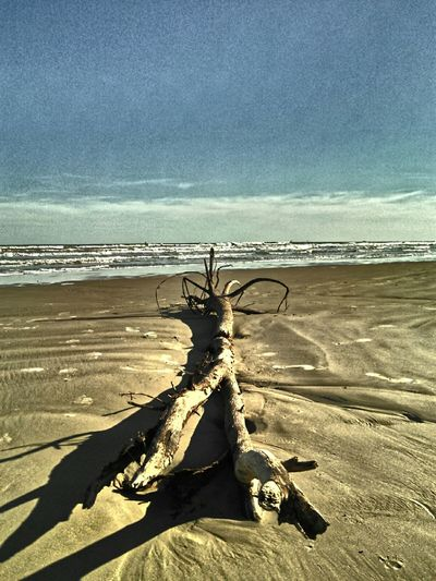 Showcase: November Tree Washed Up On Beach Ocean Drifter Life Is A Beach Clouds And Sky Wood