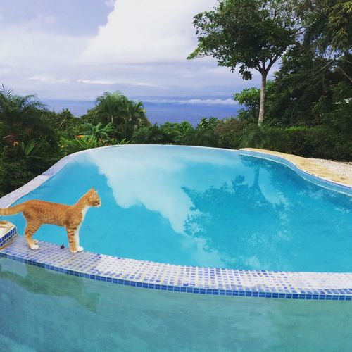 Water One Animal Swimming Pool Sky Animal Themes Nature Mammal Outdoors Scenics Sea No People Tranquil Scene Tree Beauty In Nature Domestic Animals Pets Mountain