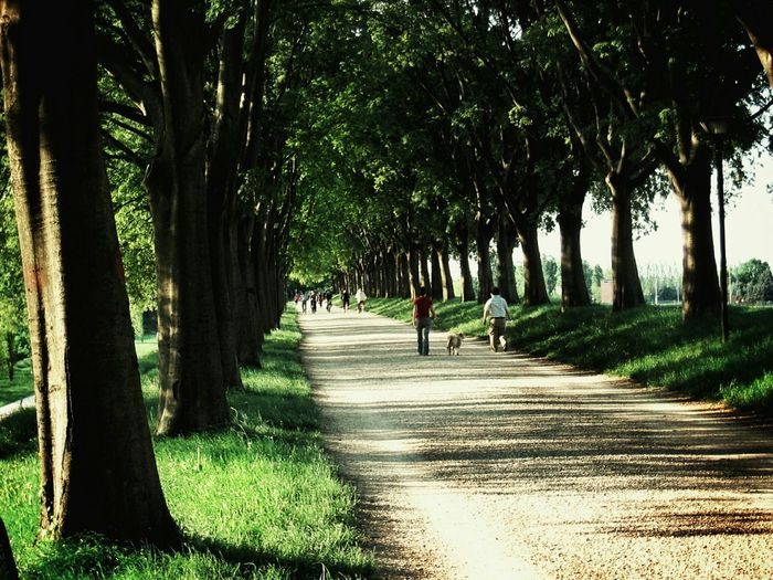 a walk on the ancient city walls Ferrara Ferrara- Italy Ferrara Wall Light And Shadow