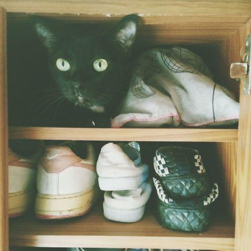 Blackcats Thaicats Cute Lovecats❤️