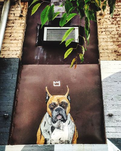 Streetart in jersey city @sean9lugo Graffiti Art