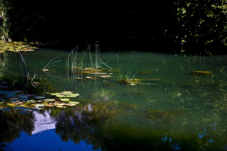 Reflection of plants in lake