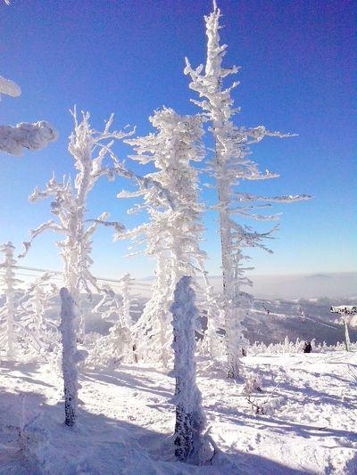 Poland Winter Trees Szczyrk Mountain View Wintertime Winter Poland