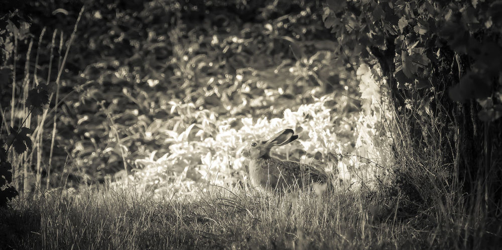 The rabbit hideout Animal Animal Themes Animal Wildlife Animals In The Wild Day Field Grass Growth Hideout Land Mammal Nature No People Non-urban Scene One Animal Outdoors Plant Rabbit Selective Focus Sitting Tree Vertebrate
