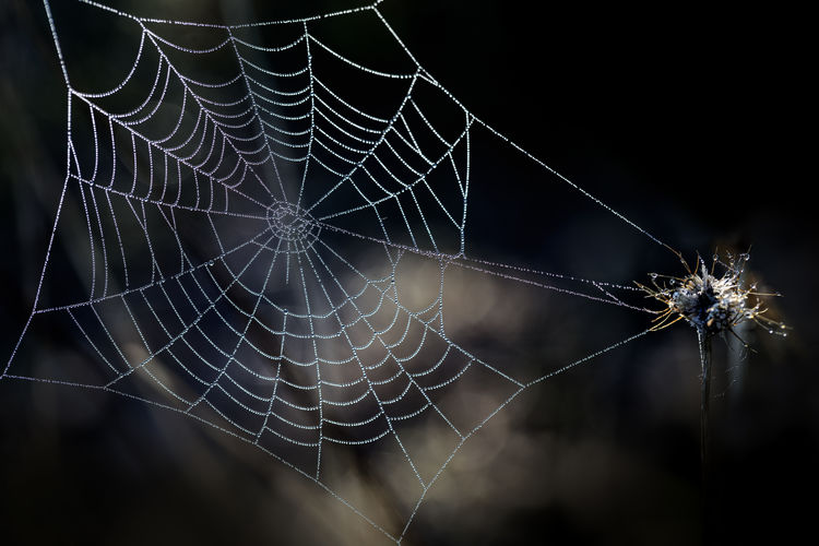 Close-up Dew Drops Focus On Foreground Fragility Nature Night Outdoors Spider Spider Web Web