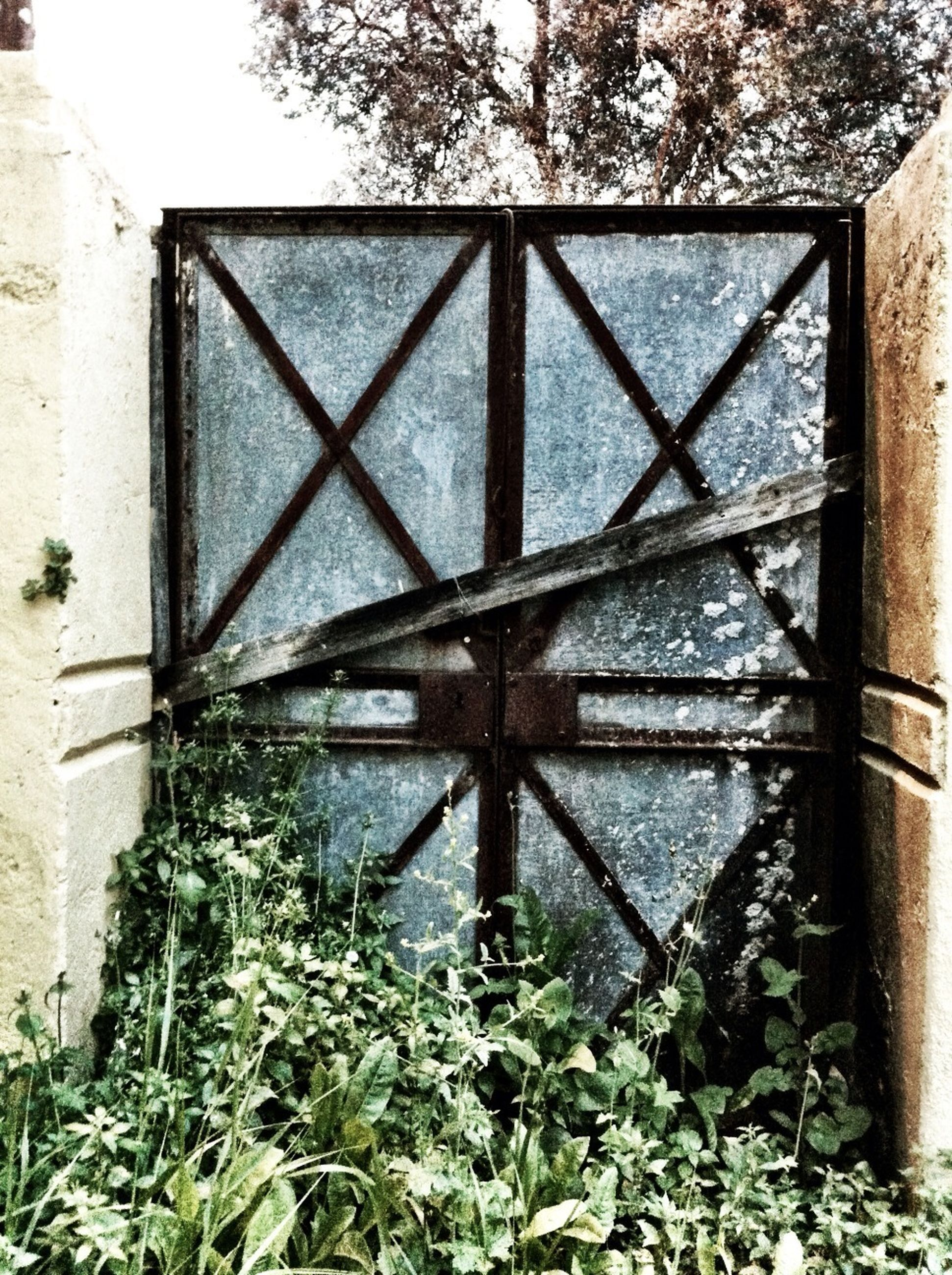 built structure, architecture, metal, plant, protection, building exterior, safety, fence, security, growth, old, day, rusty, weathered, wall - building feature, metallic, abandoned, close-up, outdoors, no people