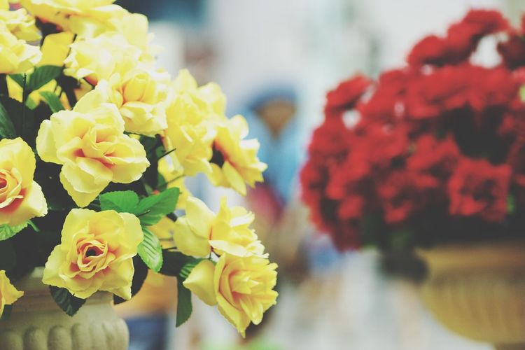 Flower Focus On Foreground Petal Close-up Yellow No People Beauty In Nature Fragility Flower Head Day Nature Indoors  Freshness I Want To Know Your Secret, C I Always Thinking About U, G Thank You,❤️ 감사합니다