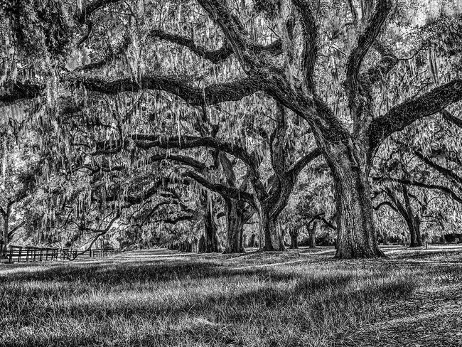 Peace!! #blackandwhite #Nature  #peace #shadow #blackwhite #sunlight Backgrounds Beauty In Nature Close-up Day Growth Nature No People Tree