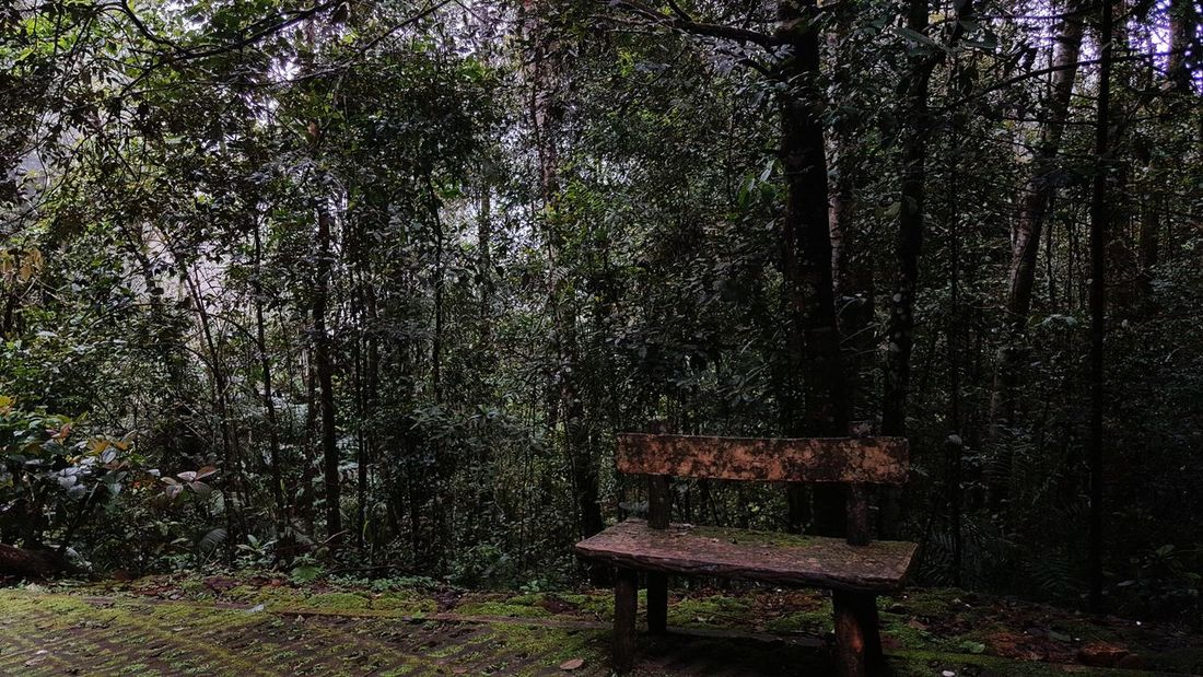 Bench Seat Foggy Weather Mobilephotography Nature Photography Wet Day Borneo Sabah National Park No People Tree Outdoors Day Nature Shadow Beauty In Nature Empty Forest AI Now