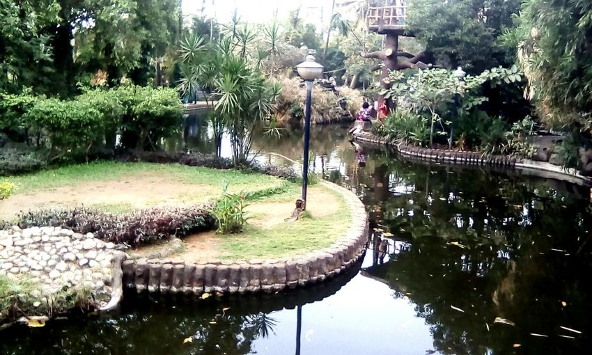 A Water Garden In Beauty In Nature India