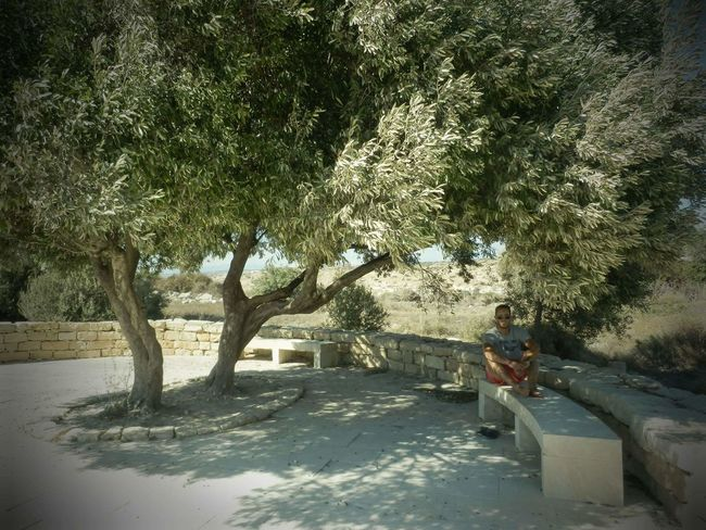 Summer Big Tree Resting Olive Tree Sitting In The Shade Cyprus Summertime One Person Tree Nature Outdoors Vacations One Man Only Day Time Spending Moments The Secret Spaces Art Is Everywhere Sommergefühle Breathing Space