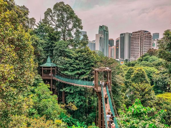 Urban Forest Nature_lovers Nature_landscape Nature_collection Green Tree Urbanforest  Landscape Landscape_Collection Landscape_photography Tree City Skyscraper Modern Sky Architecture Building Exterior Urban Skyline Tower Cityscape Growing Urban Scene Downtown