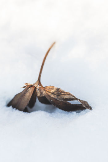 Close-up of insect on dry leaf during winter