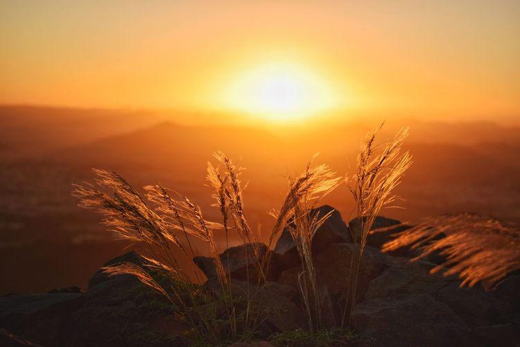 sunset Dawn