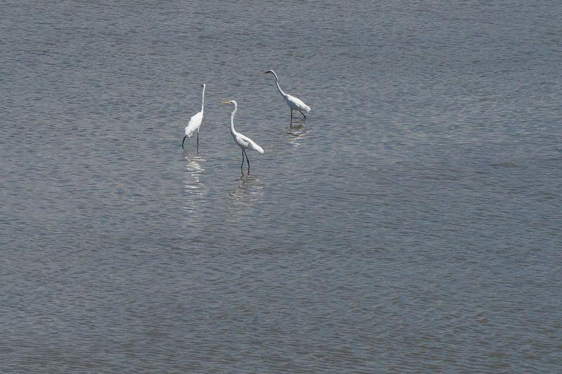 High angle view of gray heron on lake