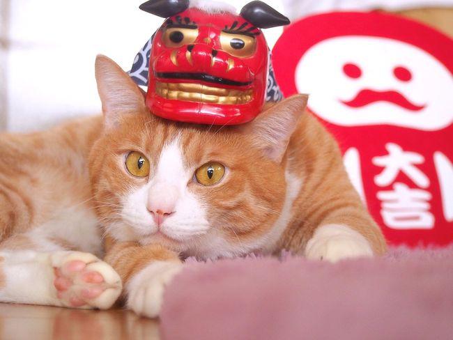 じゃぱにーずスタイル んなわけない Cat Animal Themes Cats Of EyeEm Cat Photography Catoftheday Catsofinstagram Cat Lovers Pets Yoneyukithecat One Animal