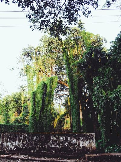 Tree Growth No People Day Nature Green Color Beauty In Nature Low Angle View Break The Mold Loveforphotography Art Is Everywhere Outdoors Beauty In Nature ❤️❤️ The Photojournalist - 2017 EyeEm Awards