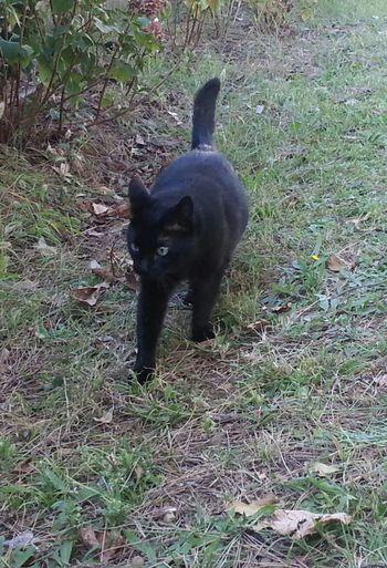 My Cats Cats Gatti Black Cats