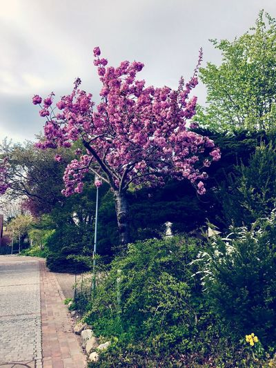 Tree Nature Pink Color Day First Eyeem Photo