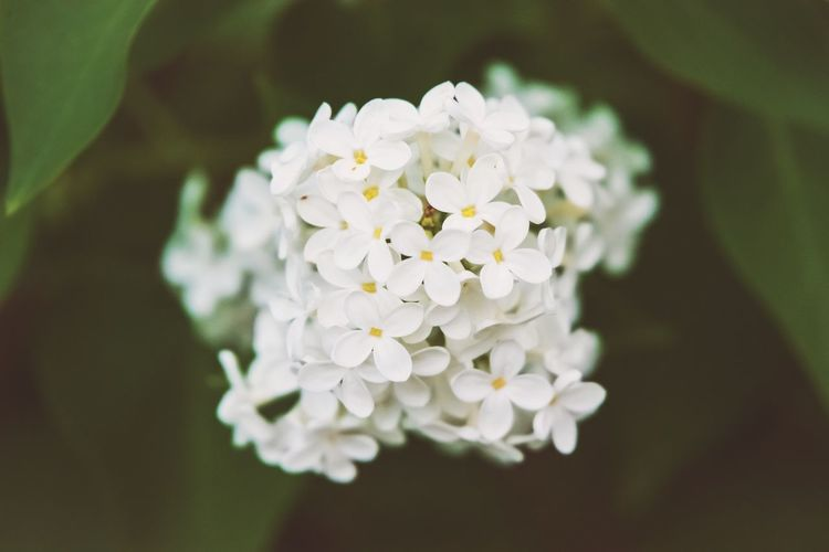 Springtime Flowers Flower Flowering Plant Freshness Plant White Color Petal Fragility Beauty In Nature Inflorescence Vulnerability  Flower Head Close-up Nature Indoors  Growth Directly Above Flower Arrangement