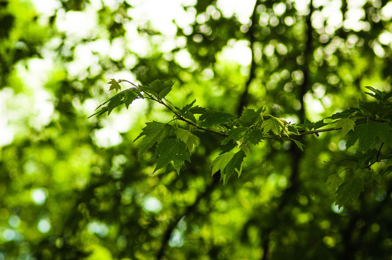 Beauty In Nature Branch Close-up Day Freshness Green Color Growth Leaf Nature No People Outdoors Tree