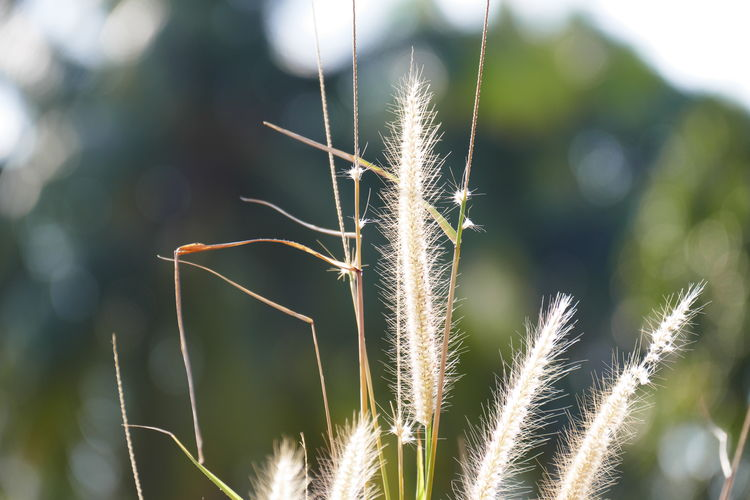 Plant Growth Green Color Focus On Foreground No People Close-up Nature Beauty In Nature Sunlight Day Tranquility Outdoors Grass Field Growth In Nature Plant Part