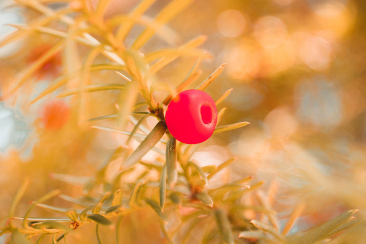 Fall Colours Plant Beauty In Nature Nature Flowering Plant Flower Close-up Freshness Growth Summer No People Selective Focus Plant Part Leaf Sunlight Yellow Field Outdoors Petal Land Flower Head A New Beginning