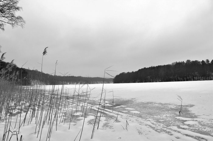 Brandenburg Liepnitzsee Trzoska Winter Beauty In Nature Cold Temperature Day Lake Landscape Nature No People Outdoors S/w See Snow Tree Waldsee Water Winter