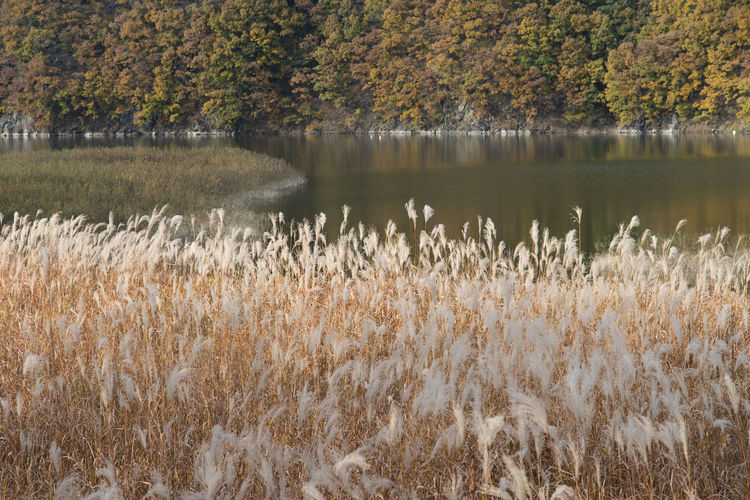 autumn landscape at Janggye Tourism Place in Okcheon, Chungbuk, South Korea Autumn Janggye Okcheon Riverside Autumn Beauty In Nature Day Grass Growth Lake Nature No People Outdoors Plant River Scenics Tranquil Scene Tranquility Tree Water