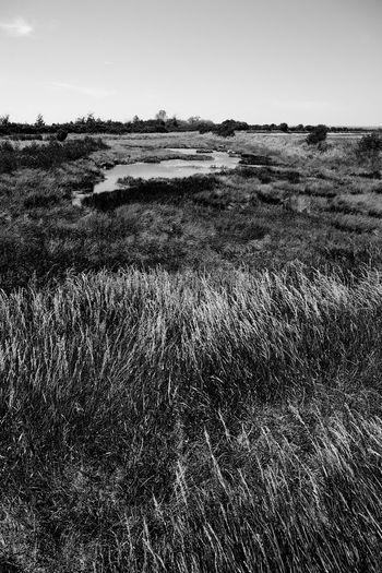 Vanishing Salt Marsh Salt Marsh Beauty In Nature Blackandwhite Environment Grass Growth Landscape Nature Outdoors Plant Scenics - Nature Tranquil Scene Tranquility