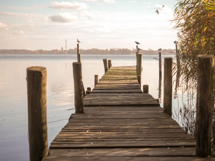 Pier in Altwarp at sunset Wood - Material Water Sky The Way Forward Direction Pier Tranquility Tranquil Scene Nature No People Sea Scenics - Nature Wood Paneling Beauty In Nature Cloud - Sky Jetty Day Empty Post Wood Wooden Post Outdoors Diminishing Perspective Long