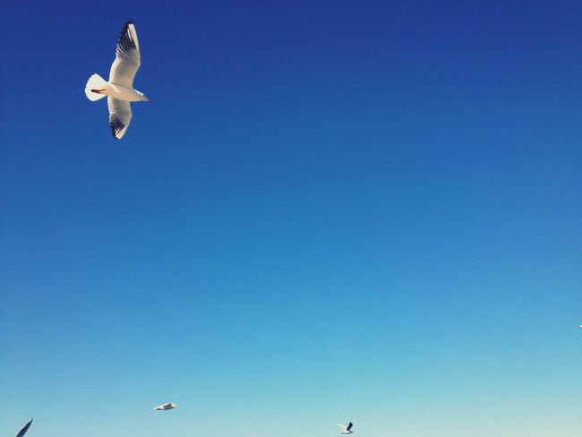 The Seagull Blue Sky Flying Seagull Seagulls Flying Over Me Flying From My Point Of View Enjoying Nature Nature Lover Enjoying Life